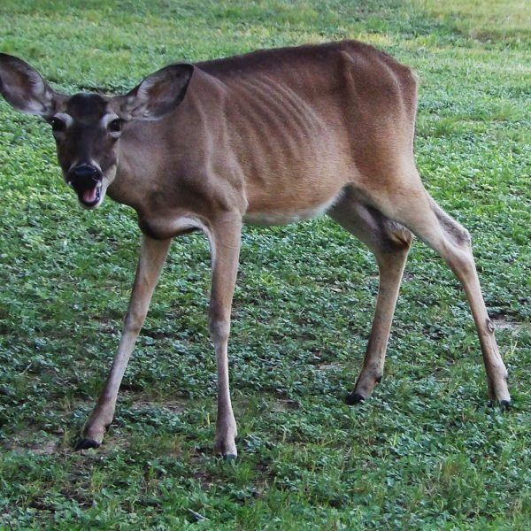 PHOTO STORY: Wildlife startled by return of student life