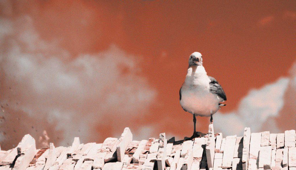 Seagull by Keanu Born